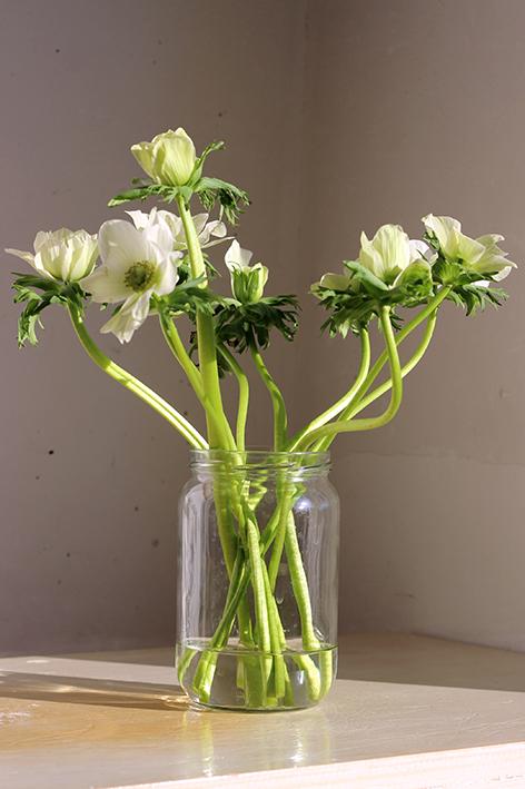 Modarium afbeelding van witte bloemen in de zon