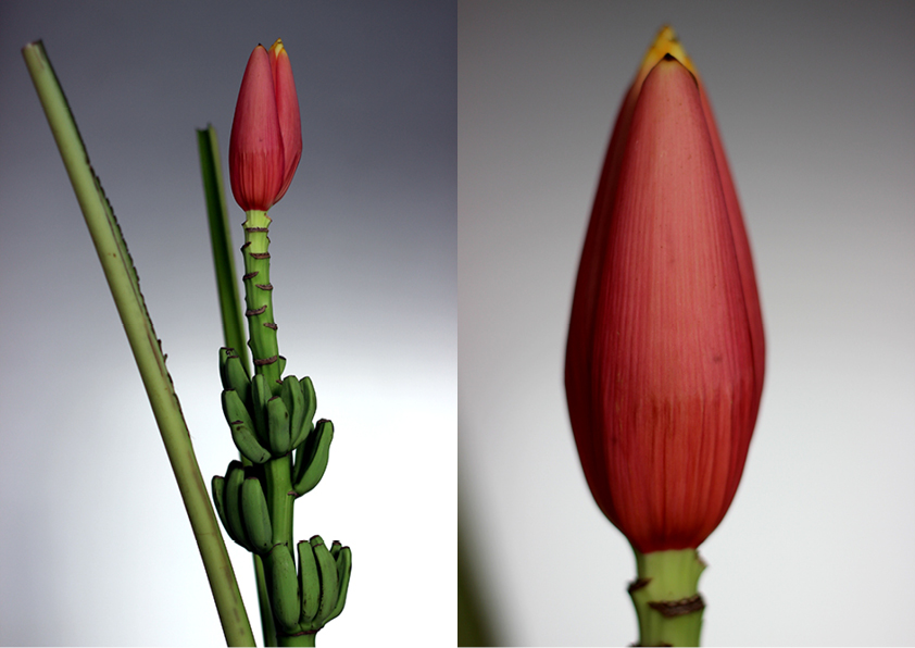 Modarium beeld voor wilde wonderen bloemen en planten trend 2016 moodboard 07 met bananenbloem
