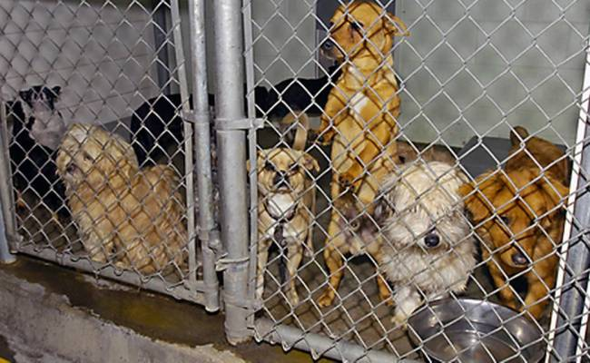 Top Stanislaus Animal Shelter Job Goes Begging The Modesto Bee