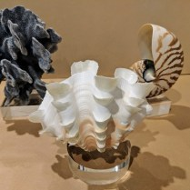 "**ITEM NOW SOLD** Set/3 seashells mounted on acylic bases. Heights vary from 5"" to 7.5"" 150.- set/3"