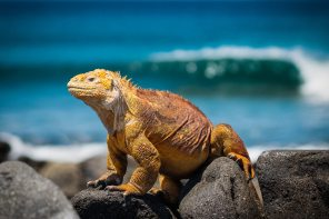 Compelling Reasons To Consider The Galapagos Islands For Your Next Vacation