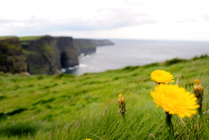 Wildflowers at the Cliffs of Moher in Ireland