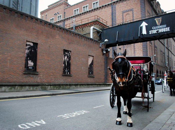 Horse and buggy in front of the Guinness Storehouse in Dublin, Ireland