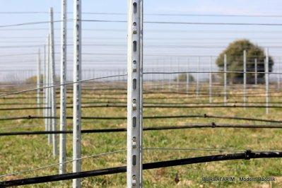 Duvar Tipi - Şaraplık Bağ için