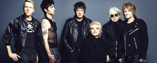 Blondie, long time, pollinator, Modern Coma