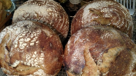 4 boules of sourdough