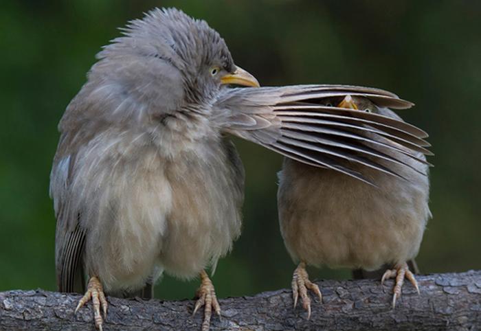 awbirds