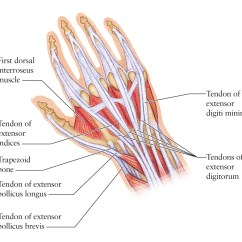 Wrist And Hand Unlabeled Diagram Light Bar Wiring Without Relay Of Anatomy Left Modernheal