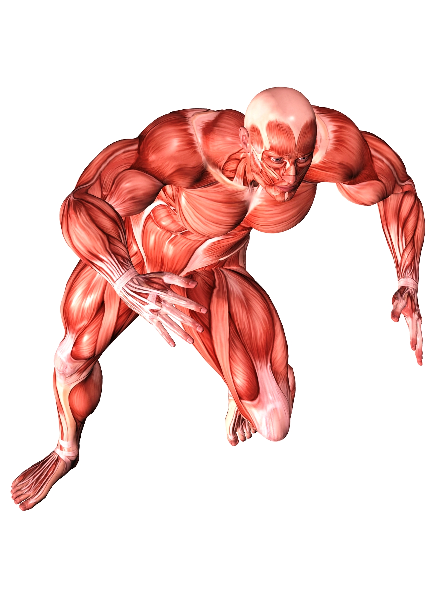 Muscular System Activities