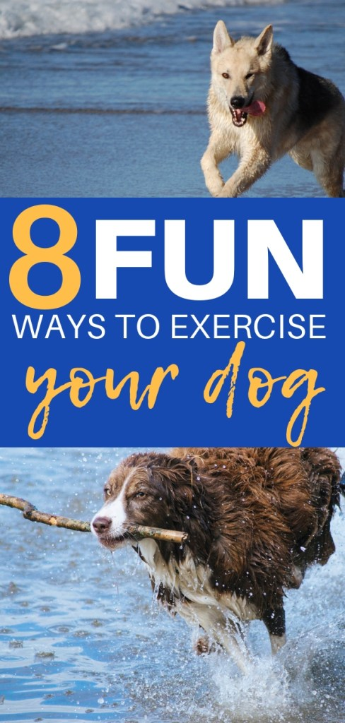 8 Fun Ways To Exercise Your Dog