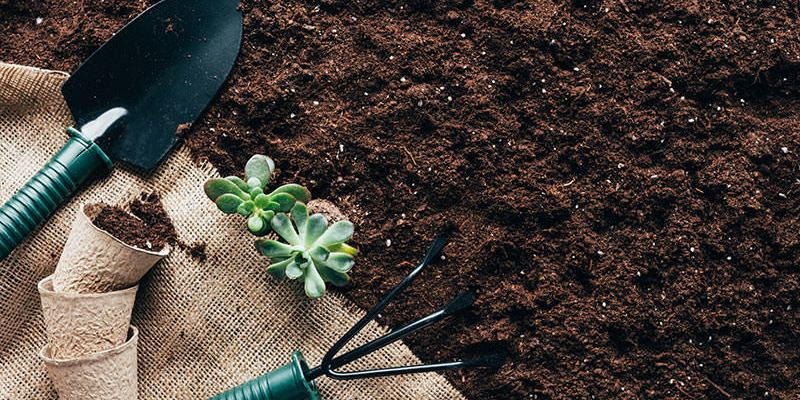 Ways To Use Coffee Grounds In Your Garden