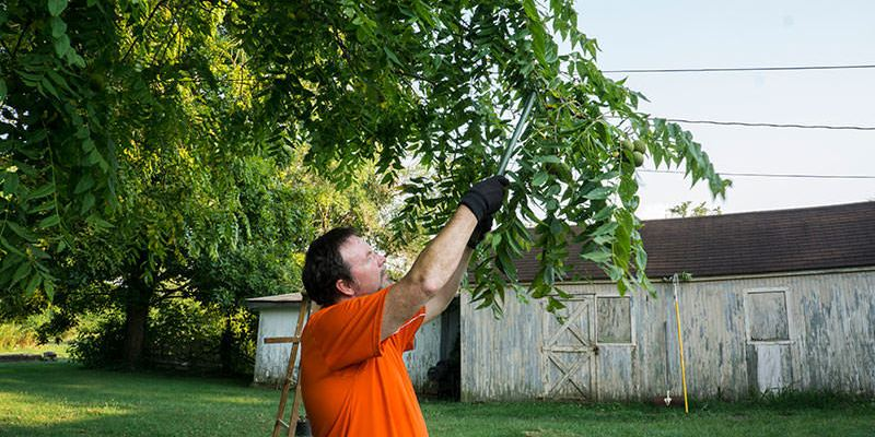 Trim & Prune Trees in Your Backyard With These Pole Saws