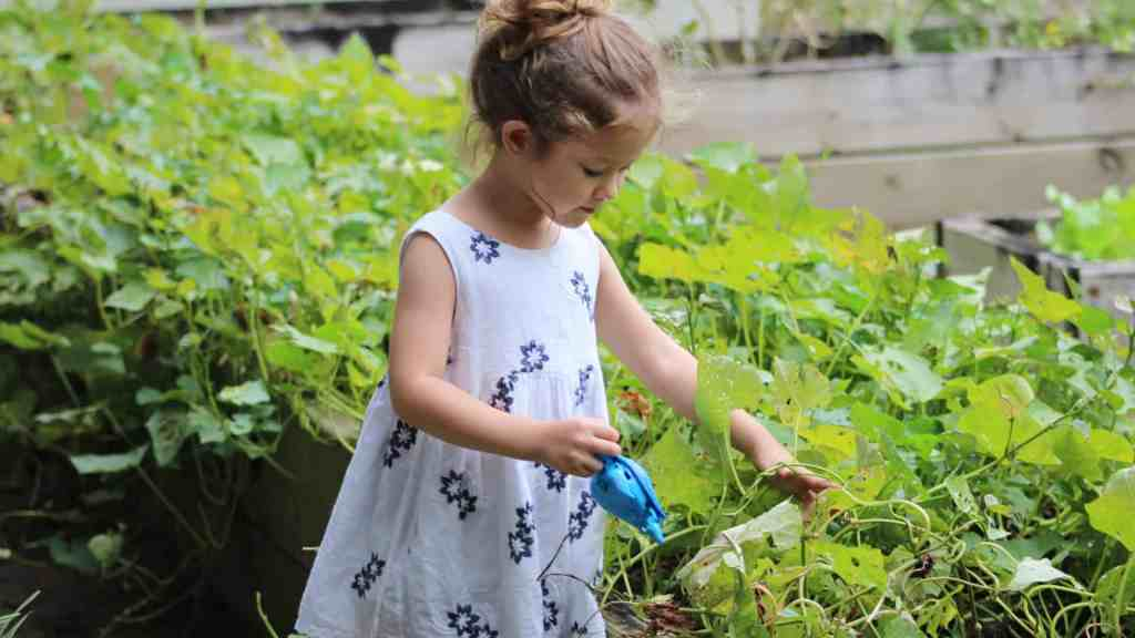 vegetable patch for kids