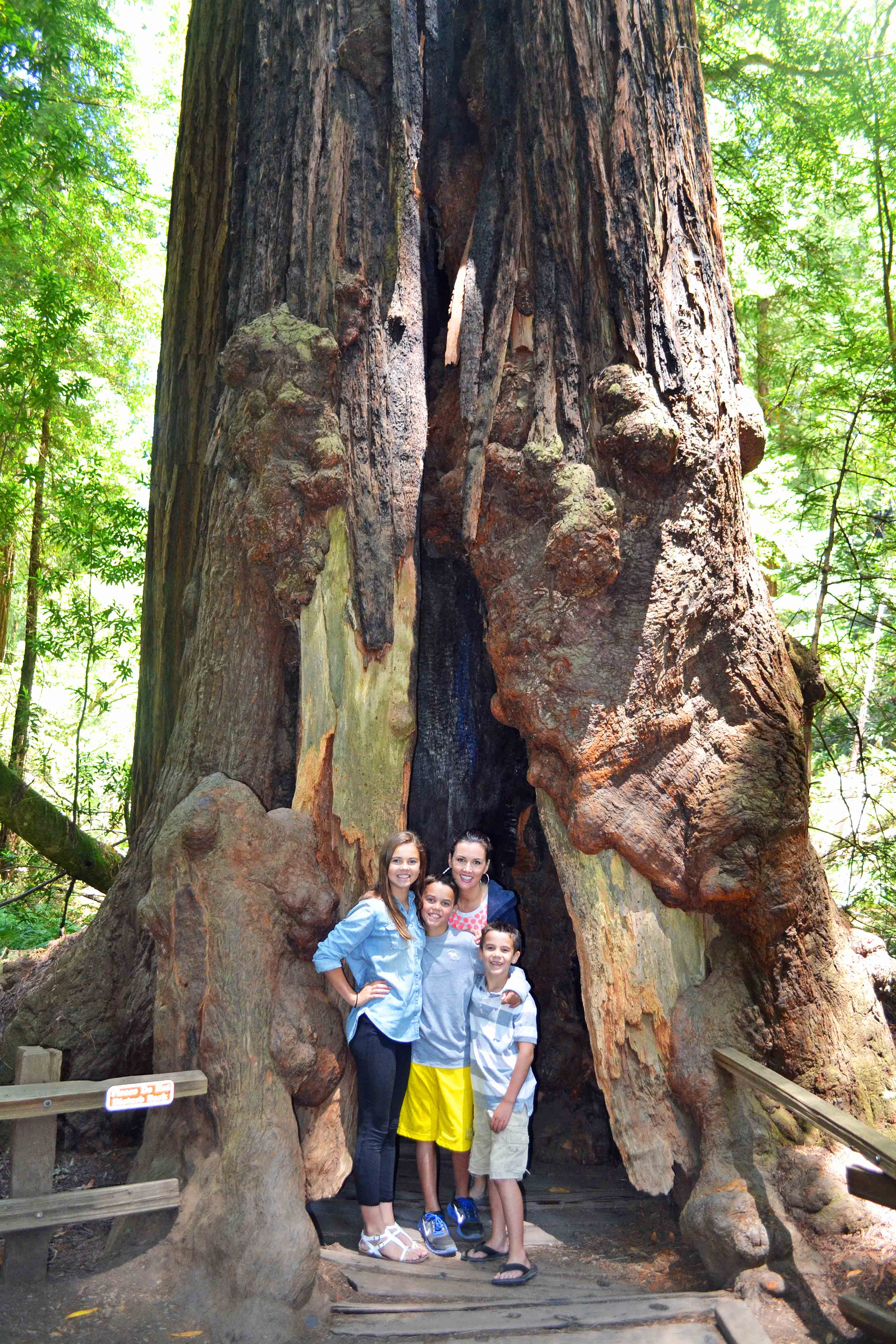Muir Woods California Pacific Highway 1 Road Trip Guide