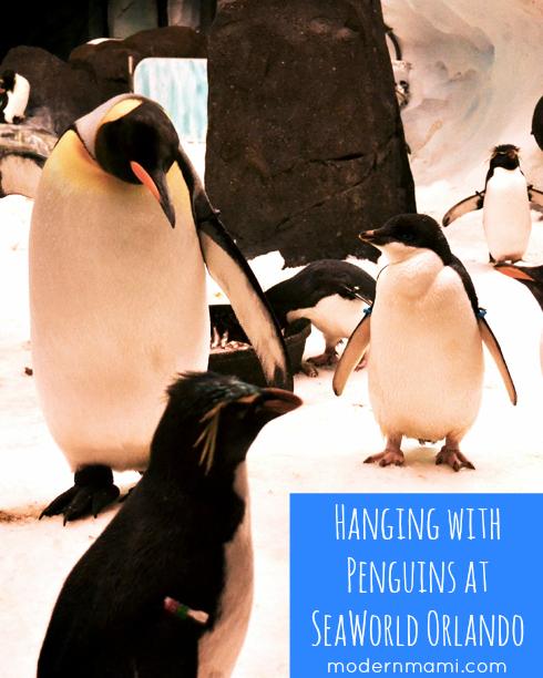 Penguins Up-Close Tour at SeaWorld Orlando