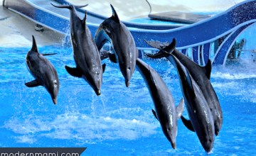 Learning About Animal Conservation & Rehabilitation During SeaWorld's Wild Days