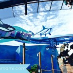 SeaWorld Adds Hypercoaster Mako
