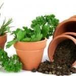 How to Build Your Own Herb Garden