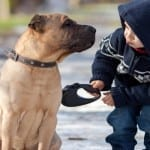 Top 10 Life Lessons You Can Learn From Your Dog