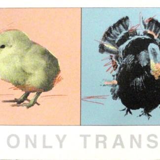 Richard Duardo - No death only transformation