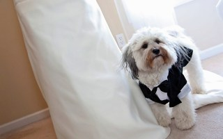 Halloween costumes for your pet