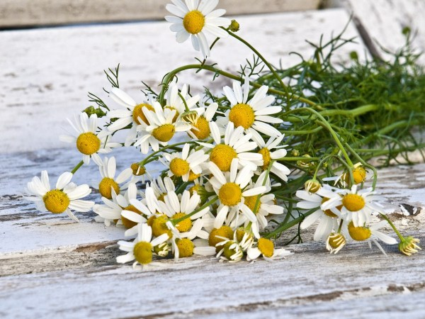 Safe for Children: Cleaning With Essential Oils #DIY #Recipes