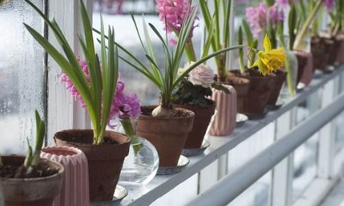 Tipos de macetas más adecuadas para el jardín o terraza | Modrego Blog