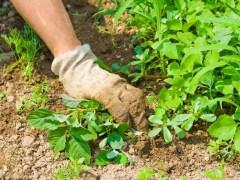 césped lleno de malas hierbas