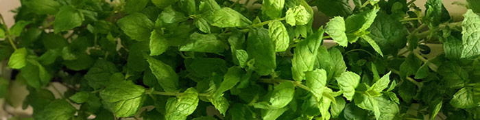Grower's Guide: cool off with peppermint this summer!