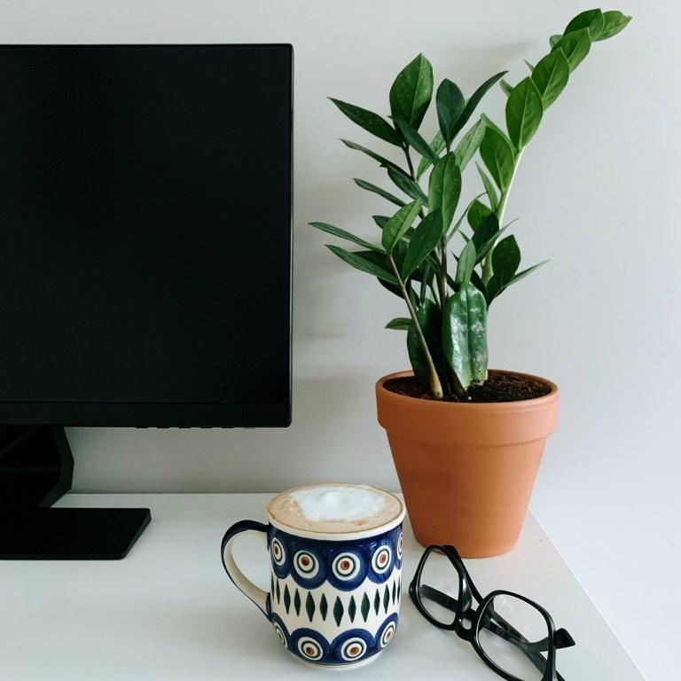 zamija - biljke koje vole tamu