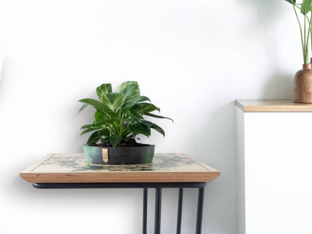 Botanical Mist stolić u modernom prostoru