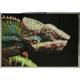 Bild: Verwandlungskünstler Funkelnde Swarovski-Kristalle verleihen dem Chamäleon ein atemberaubendes Finish. Neben all den Farbeffekten und vielen Details macht dieses Extra den besonderen Reiz des Wandschmuckes aus. Veredelt wird das Bild durch seinem Edelstahlrahmen. In verschiedenen Ausführungen erhältlich.