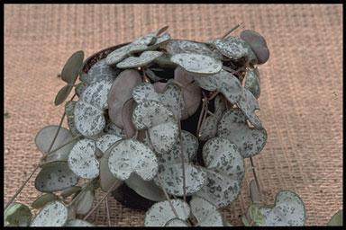 Kamerplanten  Moestuin Forum  Voor en door moestuin