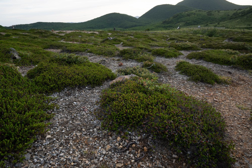 Mountain vegetation
