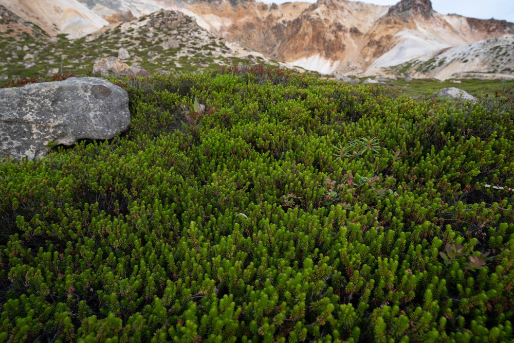 More mountain vegetation