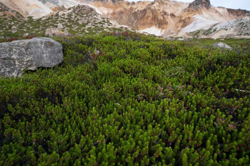 More mountain vegetation