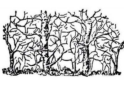 Hidden Animal Forrest Illusion