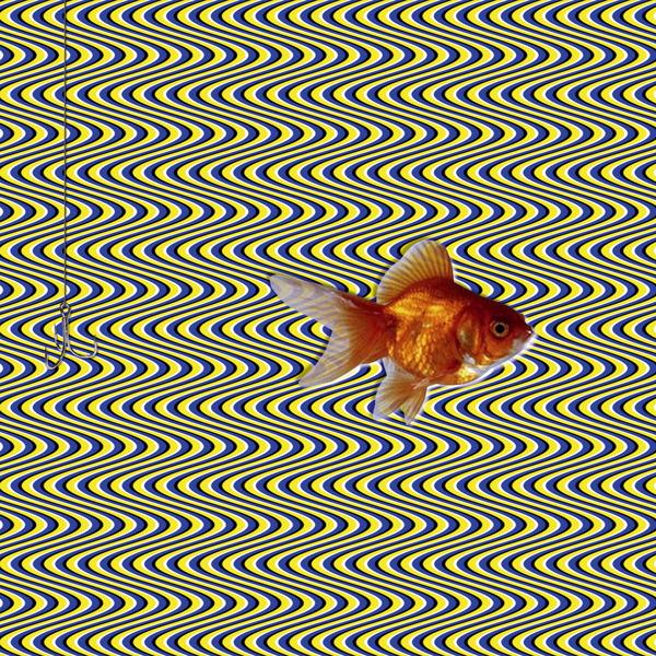 3d fish optical illusion
