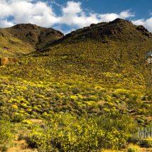 Desert Tortoise Mojave National Preserve Artists Foundation