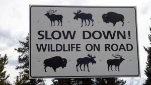 Wiosna na drogach – uwaga na zwierzęta!