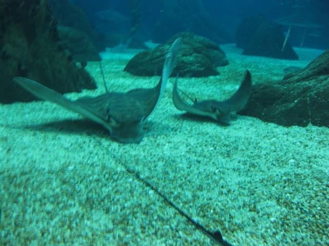Oceanarium. Foto: Ivana Kovačević