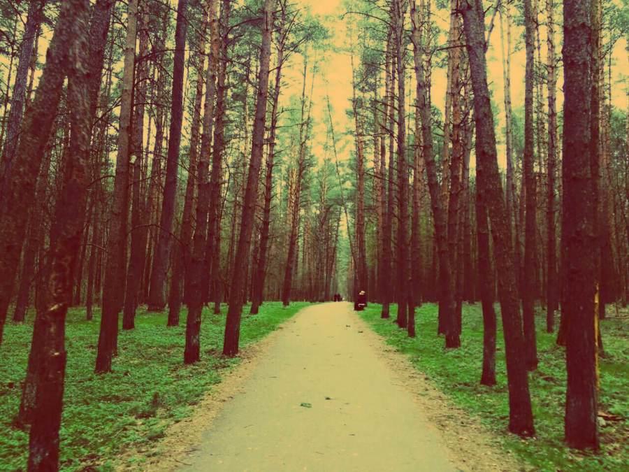Vingis Park in Vilnius im Sommer