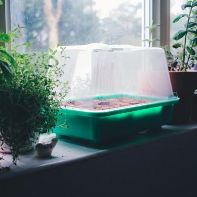 Glorious Garden – Planning Tips.
