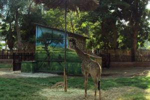اين تقع حديقة الحيوان في دبي سعر تذكرة ومواعيد
