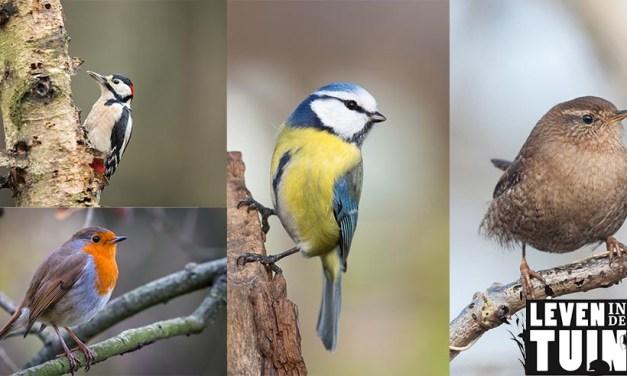 Intratuin: zo krijg je een vogelvriendelijke tuin!