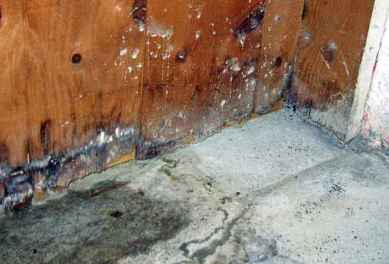 Basement Mold From Flood