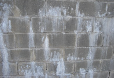 White Mold vs Efflorescence Differences Dangers