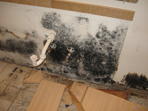 Cleaning Black Mold Steps Products To Use Precautions