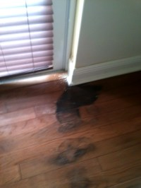 mold on wood floor under carpet - Home The Honoroak