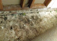 Pictures Of Black Mold Under Carpet - Carpet Vidalondon